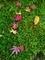 苔のカーペット@赤山禅院