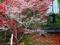 寒桜と紅葉@赤山禅院