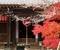 寒桜咲く赤山禅院