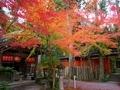 秋の赤山禅院