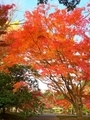 仙洞御所の秋
