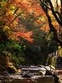 紅葉に覆われる貴船川