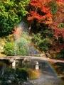 虹と紅葉@三宅八幡宮