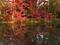 秋の半木の池@京都府立植物園