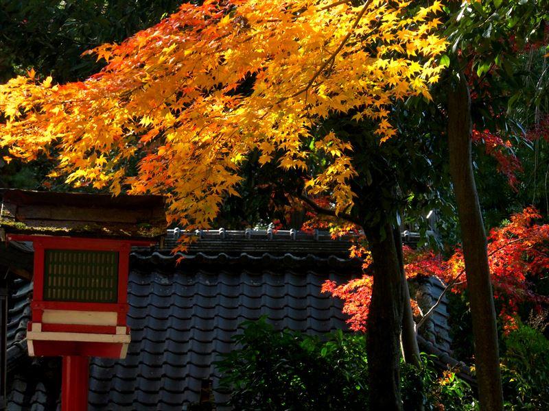 色づく鷺森神社