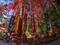 赤山禅院の七福神