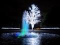 噴水と白い木@京都府立植物園