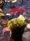 杭の上の秋@京都府立植物園