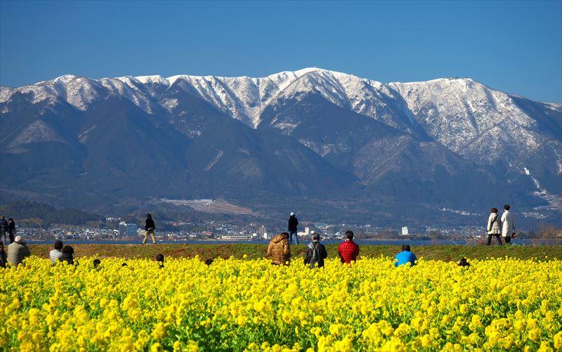菜の花と雪の比良山