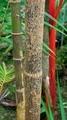 温室の植物@京都府立植物園
