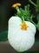 温室の植物3@京都府立植物園