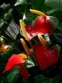 温室の植物4@京都府立植物園