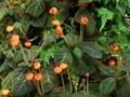 温室の植物5@京都府立植物園