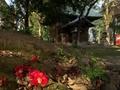落ち椿2@倉掛神社