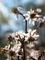 輝きの花(セリバオウレン)@京都府立植物園
