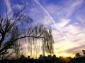柳と飛行機雲@出町柳