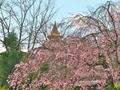 仏舎利大塔を望む@妙満寺