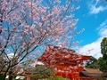 桜咲く上賀茂神社楼門