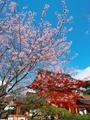 桜咲く上賀茂神社楼門2