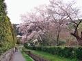 南禅寺周辺桜めぐり