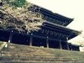 桜咲く知恩院三門