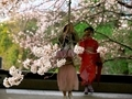 桜のお出迎え@知恩院