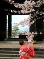桜を愛でる@知恩院