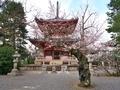 桜咲く知恩院多宝塔