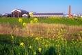 伏見の酒蔵に咲く菜の花