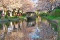 桜咲く伏見の運河