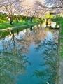 桜咲く伏見の運河4
