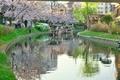 桜咲く伏見の運河5