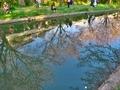 桜咲く伏見の運河6