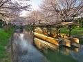 桜咲く伏見の運河7