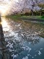 桜咲く伏見の運河8