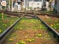 線路は続くよ@叡電