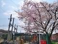 桜咲く叡電三宅八幡