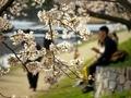 桜咲く川べりで@加茂川