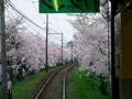 運転台から見る桜トンネル@嵐電