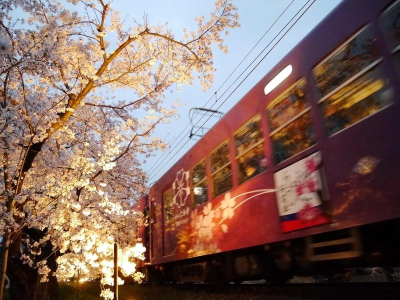 嵐電桜のトンネル2