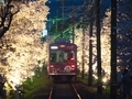 嵐電桜のトンネル3
