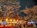 平野神社夜桜
