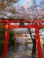 桜咲く竹中稲荷