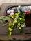 花のある手水鉢@真如堂