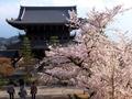 金戒光明寺山門と桜