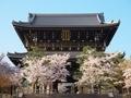 桜咲く金戒光明寺山門