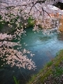 桜咲く夷川発電所