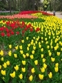 色彩豊富な春の花壇@京都府立植物園