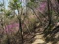 春の山道@比叡山