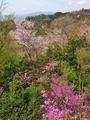 春の山@比叡山